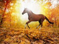 kon jesien